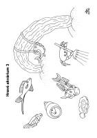 Hravé akvárium 3